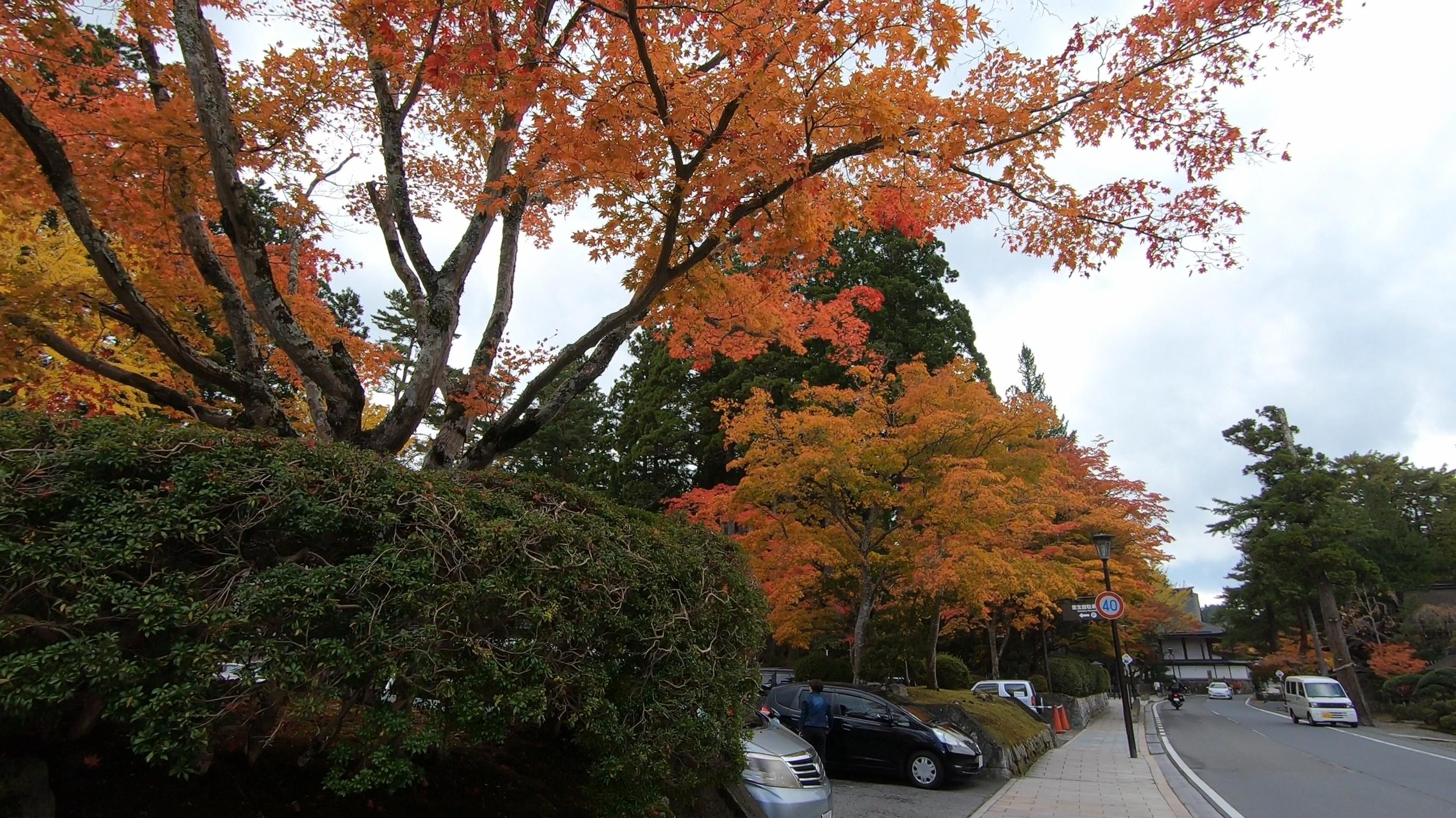 GH011840 関西でいち早く紅葉に染まる高野山へカメラ旅!