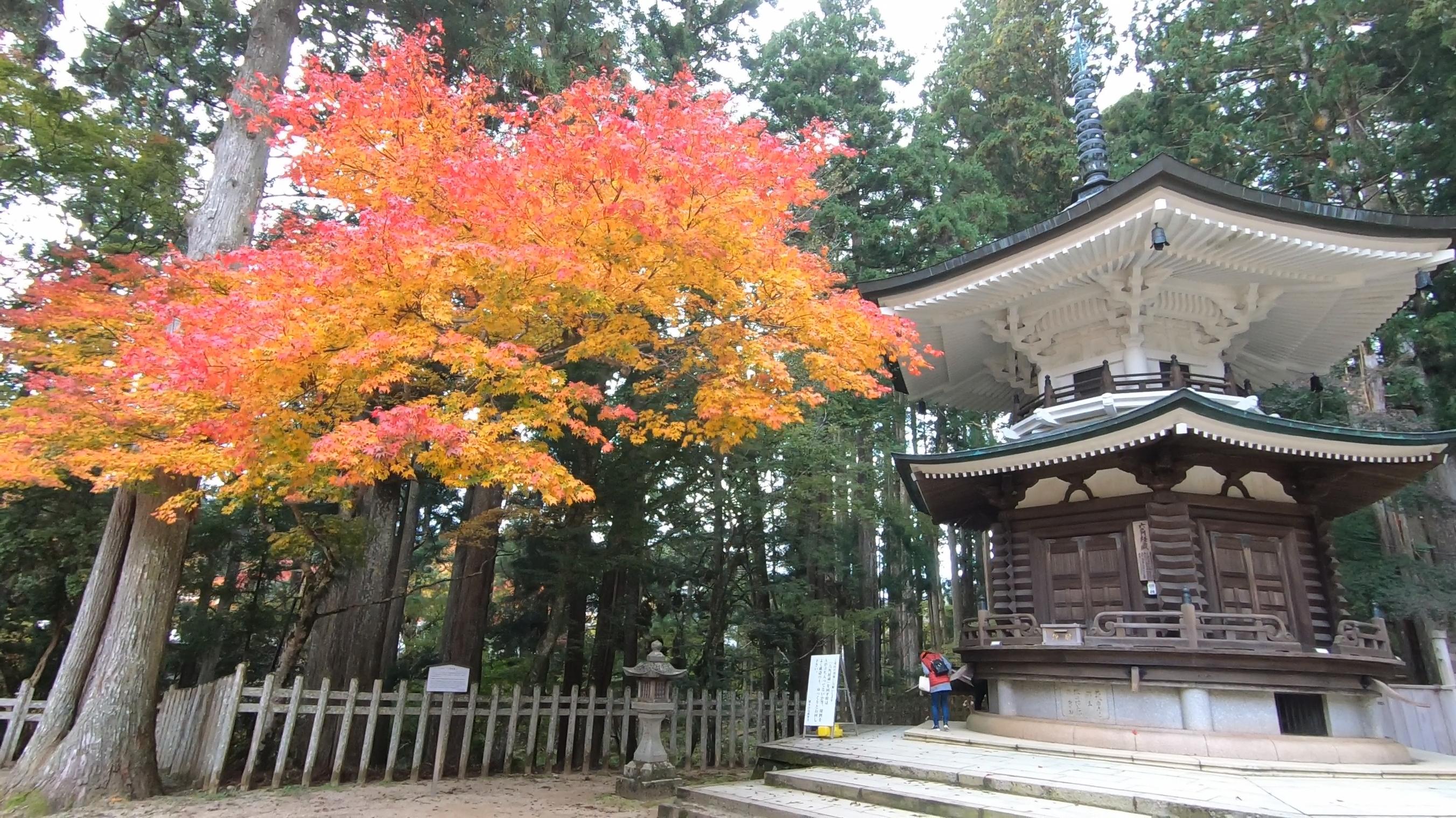 GH011845 関西でいち早く紅葉に染まる高野山へカメラ旅!