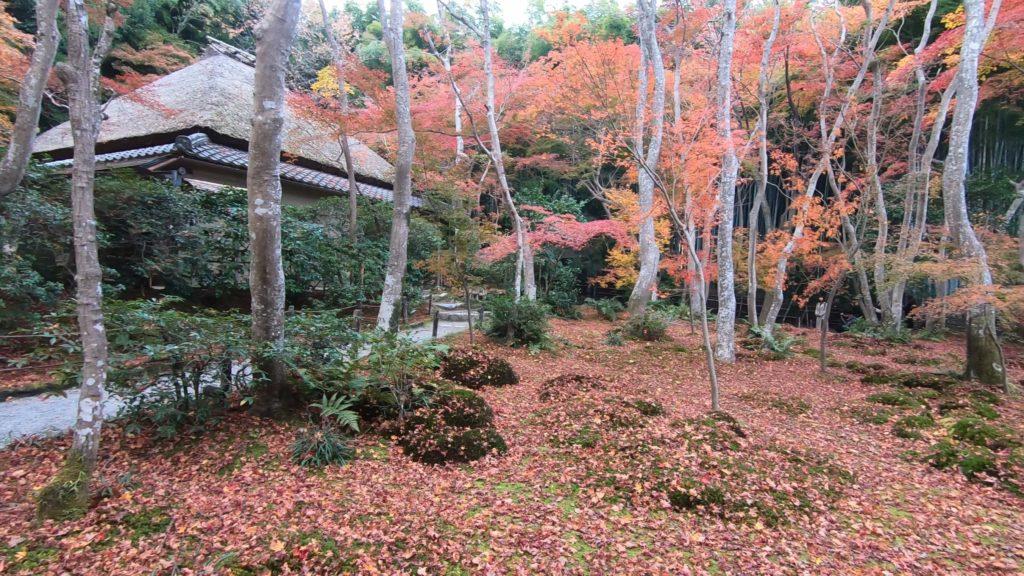 GH012033-1024x576 京都 紅葉の嵐山カメラ&観光おすすめの散策スポット ( 2019年 京都の秋、嵐山の綺麗な紅葉景色が見れる写真スポット・アクセス情報や交通手段など!)