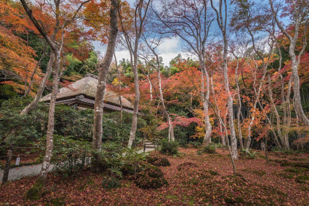ADS8944-1-1024x683 京都 - 祇王寺  ( 京都 夏 新緑 秋 紅葉 写真スポット)