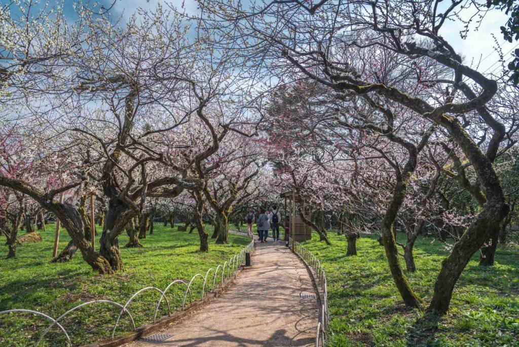 DSC_2324-1024x684 京都府 北野天満宮 Kitano Tenmangu (2020年 京都の春におすすめ梅苑・梅林スポット! 撮影した写真の紹介、ライトアップ・アクセス情報や交通手段・駐車場情報などまとめ)