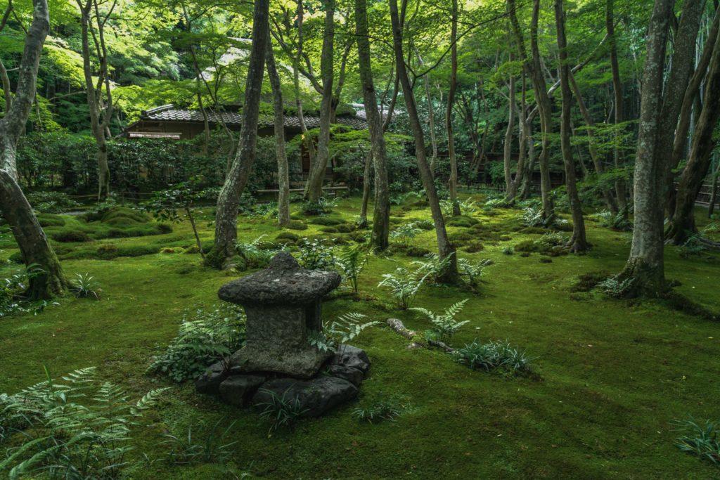 DSC_2351-1024x683 京都 - 祇王寺  ( 京都 夏 新緑 秋 紅葉 写真スポット)