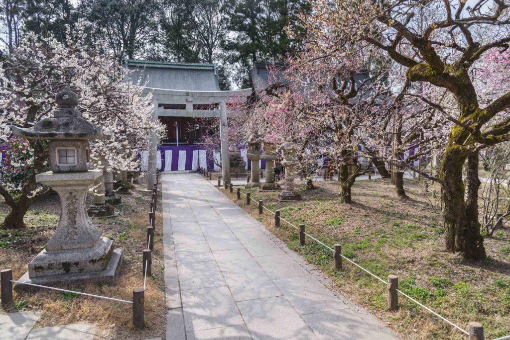 DSC_2361-1024x684 京都府 北野天満宮 Kitano Tenmangu (2020年 京都の春におすすめ梅苑・梅林スポット! 撮影した写真の紹介、ライトアップ・アクセス情報や交通手段・駐車場情報などまとめ)