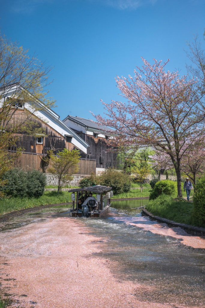 DSC_0263-683x1024 京都 - 中書島 伏見十石舟 ( 京都 春 桜 写真スポット)