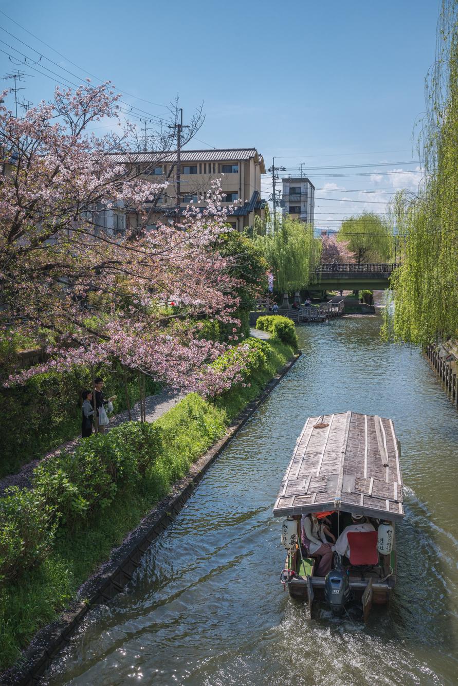 DSC_0266 京都府 中書島 伏見十石舟(桜と船の風情を感じる美しい景色!京都の春におすすめ桜写真スポット! 撮影した写真の紹介、アクセス情報など)