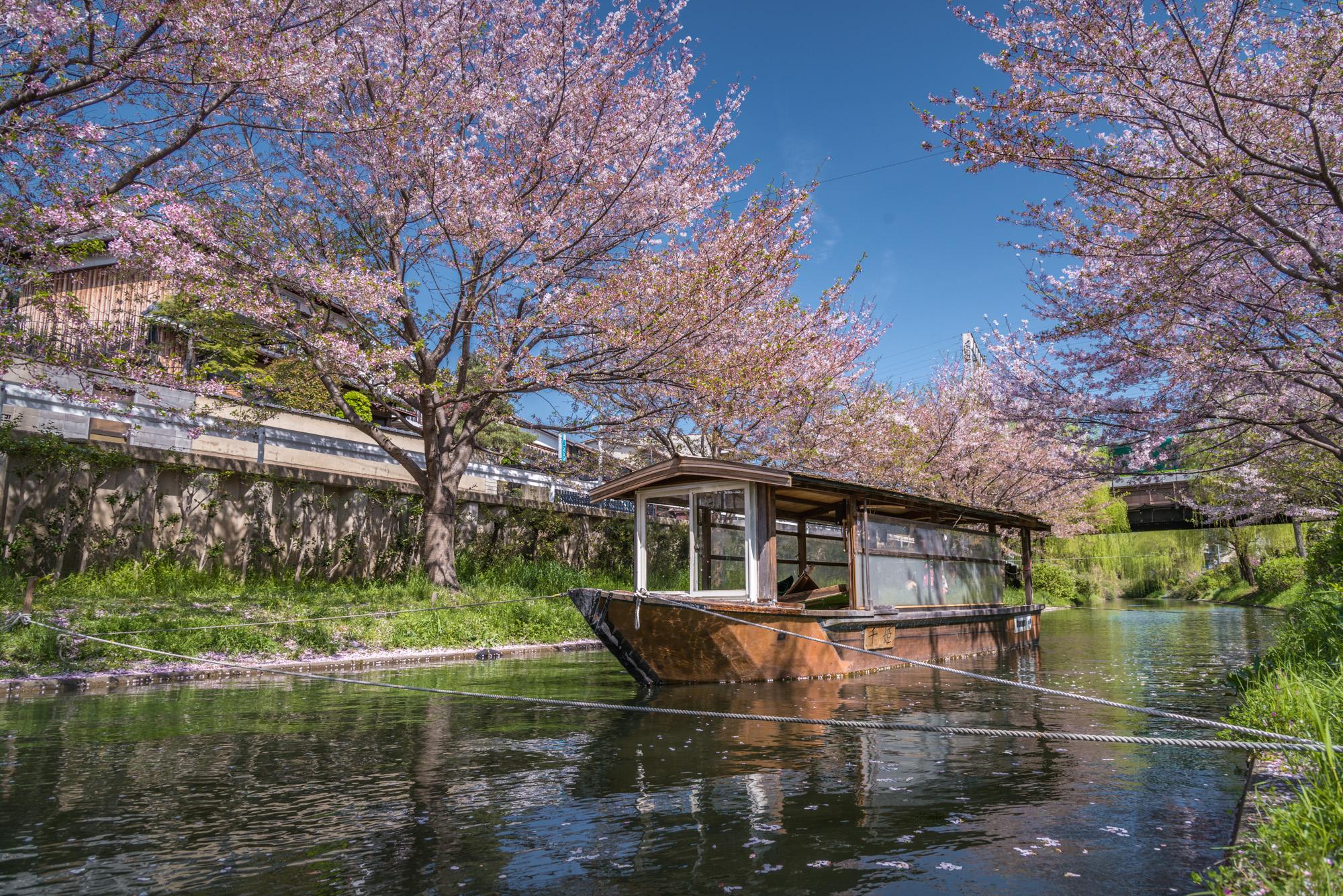 DSC_0356 京都府 中書島 伏見十石舟(桜と船の風情を感じる美しい景色!京都の春におすすめ桜写真スポット! 撮影した写真の紹介、アクセス情報など)