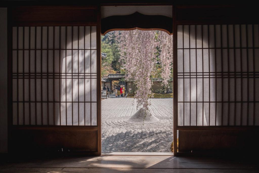 DSC_4825-1024x684 京都 - 高台寺 ( 京都 春 桜 写真スポット)