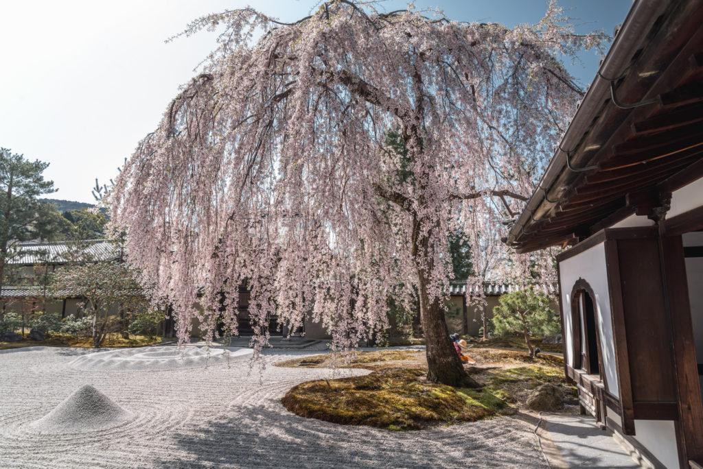 DSC_4846-1024x684 京都 - 高台寺 ( 京都 春 桜 写真スポット)