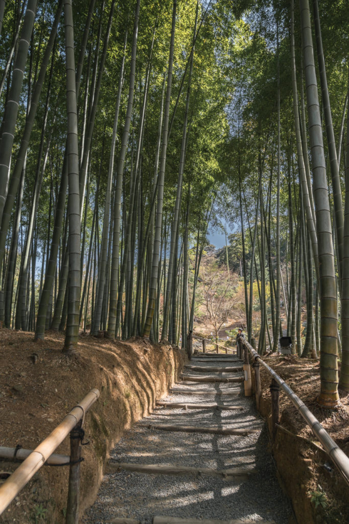 DSC_4874-683x1024 京都 - 高台寺 ( 京都 春 桜 写真スポット)