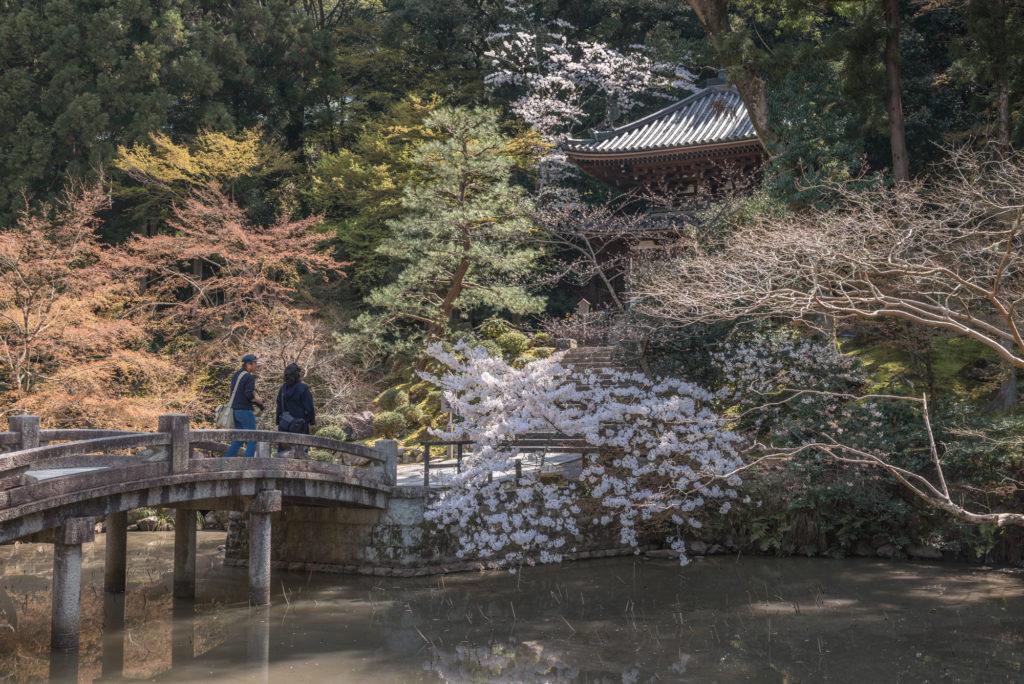 DSC_4895-1024x684 京都 - 知恩院 ( 京都 春 桜 写真スポット)