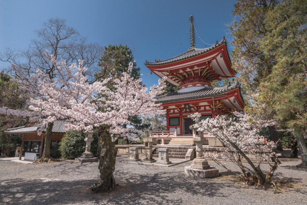 DSC_4909-1024x684 京都 - 知恩院 ( 京都 春 桜 写真スポット)