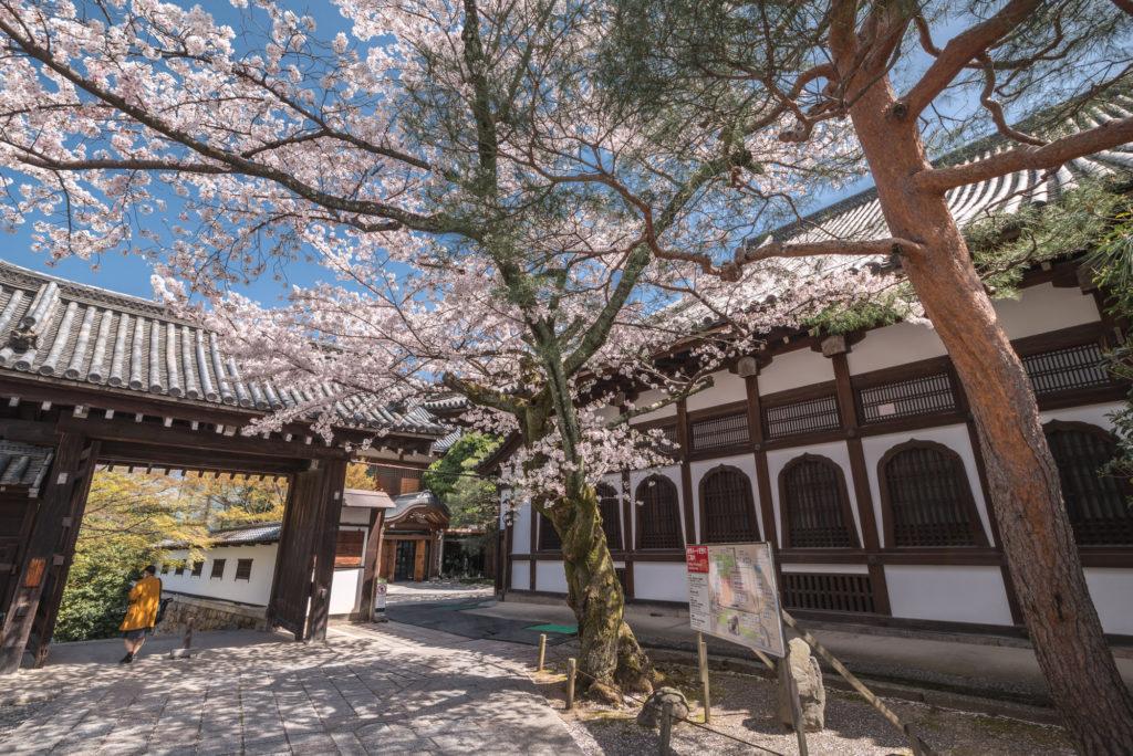 DSC_4916-1024x684 京都 - 知恩院 ( 京都 春 桜 写真スポット)