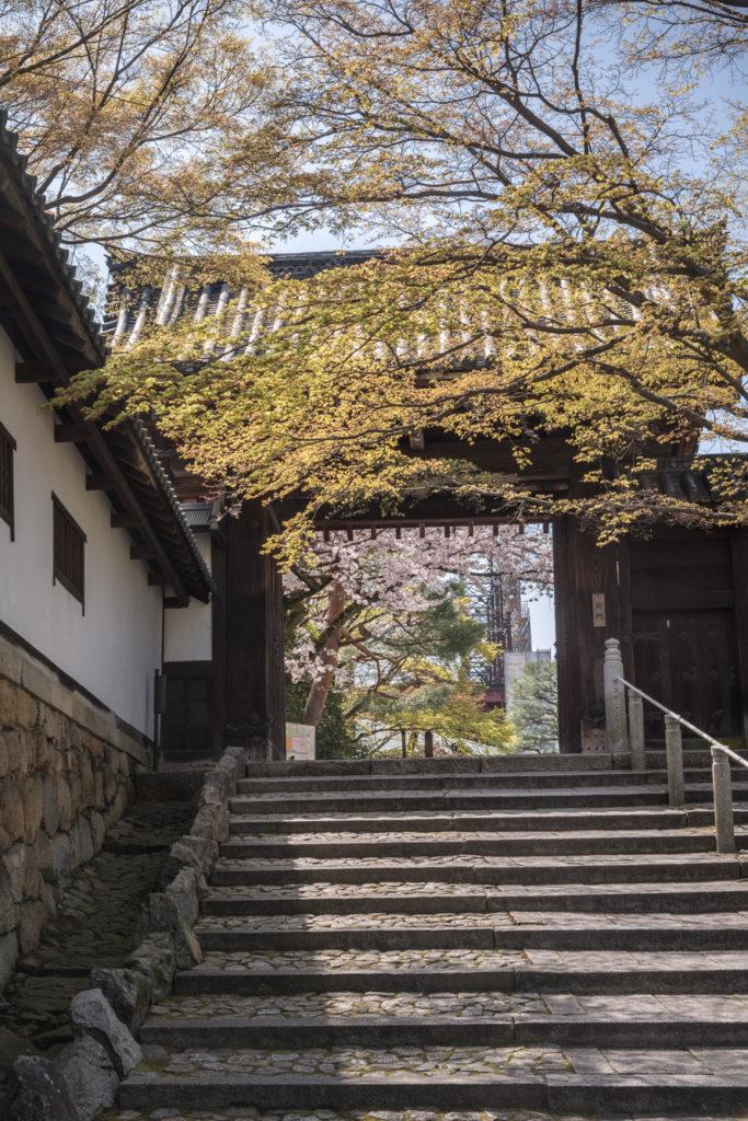 DSC_4929-683x1024 京都 - 知恩院 ( 京都 春 桜 写真スポット)
