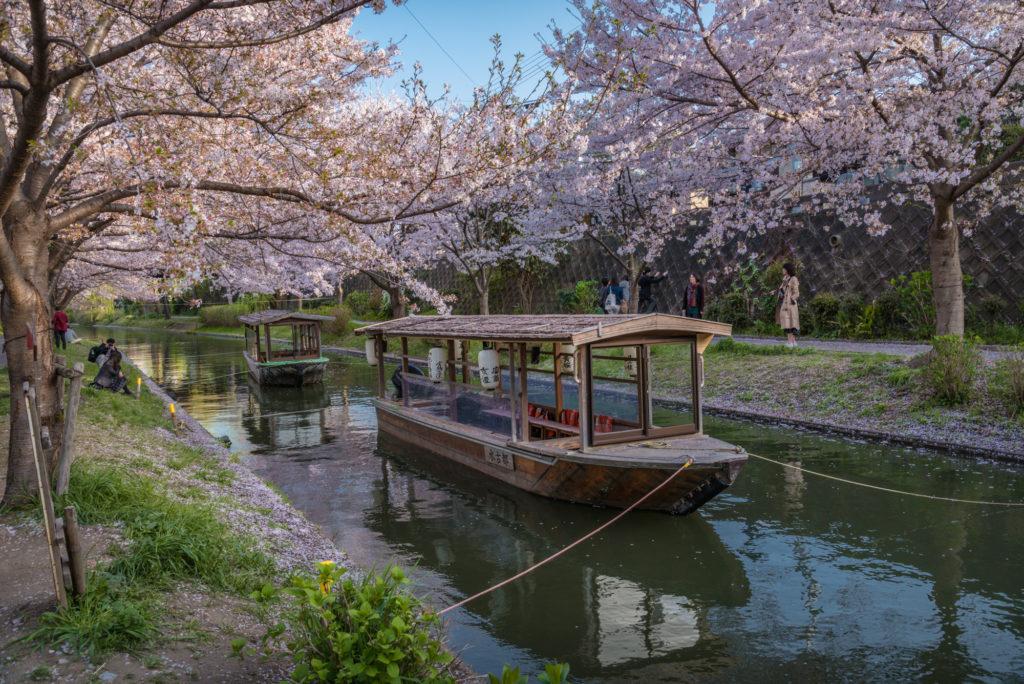 DSC_5489-1024x684 京都 - 中書島 伏見十石舟 ( 京都 春 桜 写真スポット)