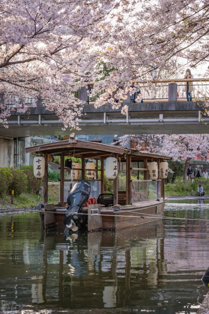 DSC_5505-683x1024 京都 - 中書島 伏見十石舟 ( 京都 春 桜 写真スポット)