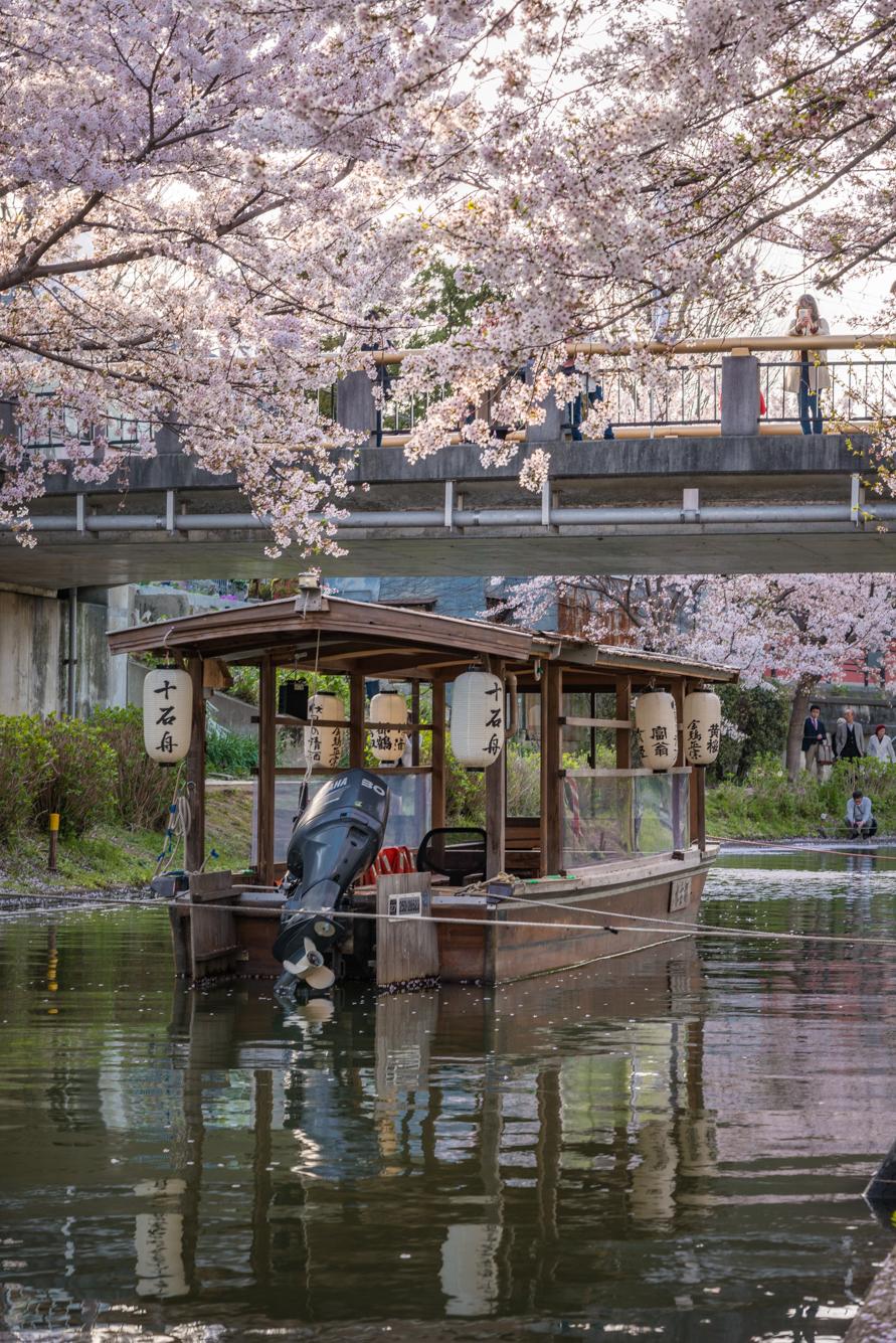 DSC_5505 京都府 中書島 伏見十石舟(桜と船の風情を感じる美しい景色!京都の春におすすめ桜写真スポット! 撮影した写真の紹介、アクセス情報など)