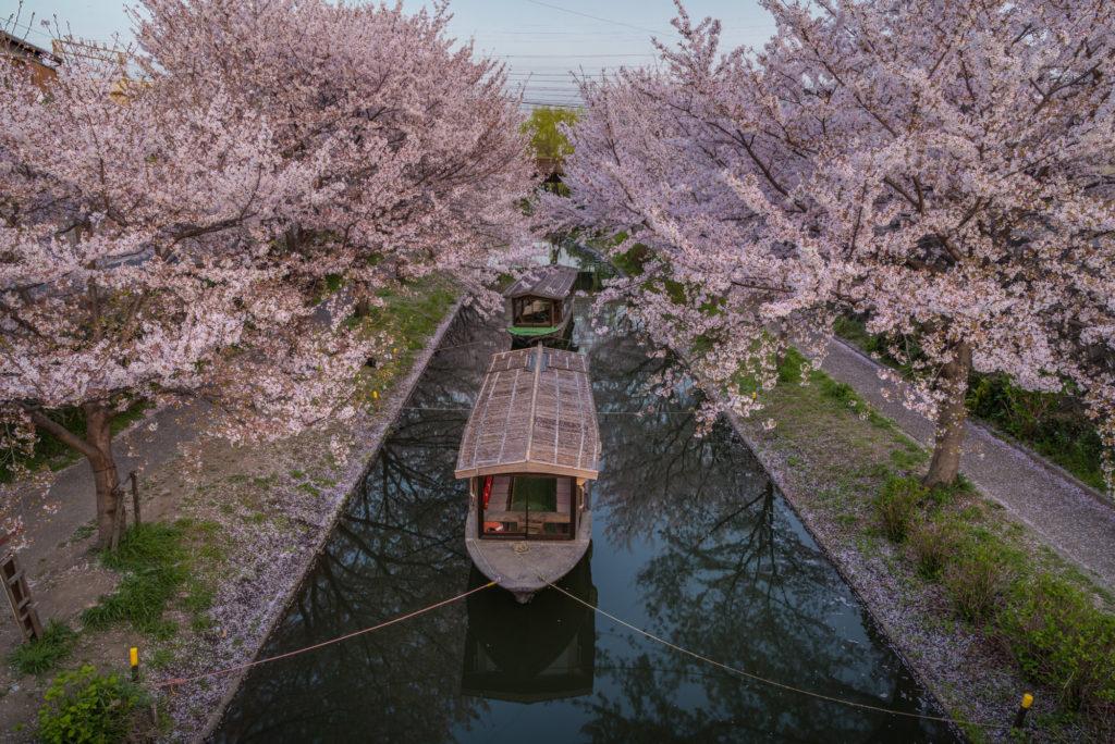 DSC_5580-1024x684 京都 - 中書島 伏見十石舟 ( 京都 春 桜 写真スポット)