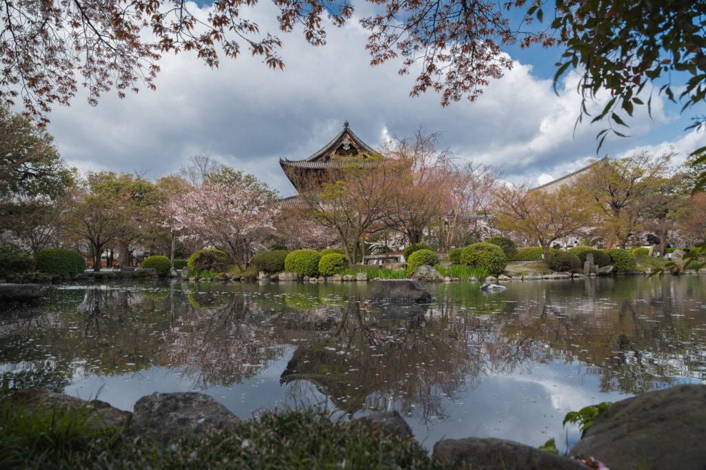 DSC01883-1024x682 京都 - 東寺 ( 京都 春 桜 写真スポット)