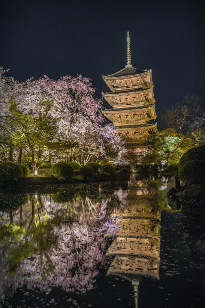 DSC_5594-683x1024 京都 - 東寺 ( 京都 春 桜 写真スポット)