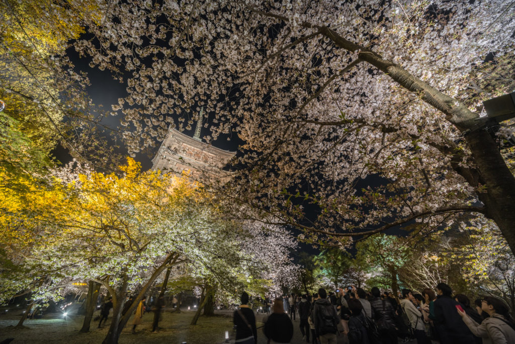 DSC_5628-1024x684 京都 - 東寺 ( 京都 春 桜 写真スポット)