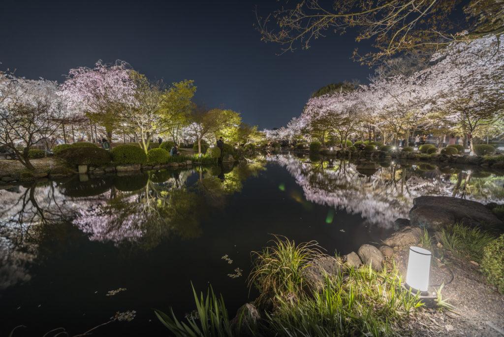 DSC_5641-1024x684 京都 - 東寺 ( 京都 春 桜 写真スポット)