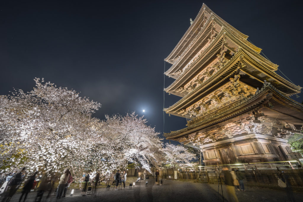DSC_5651-1024x684 京都 - 東寺 ( 京都 春 桜 写真スポット)