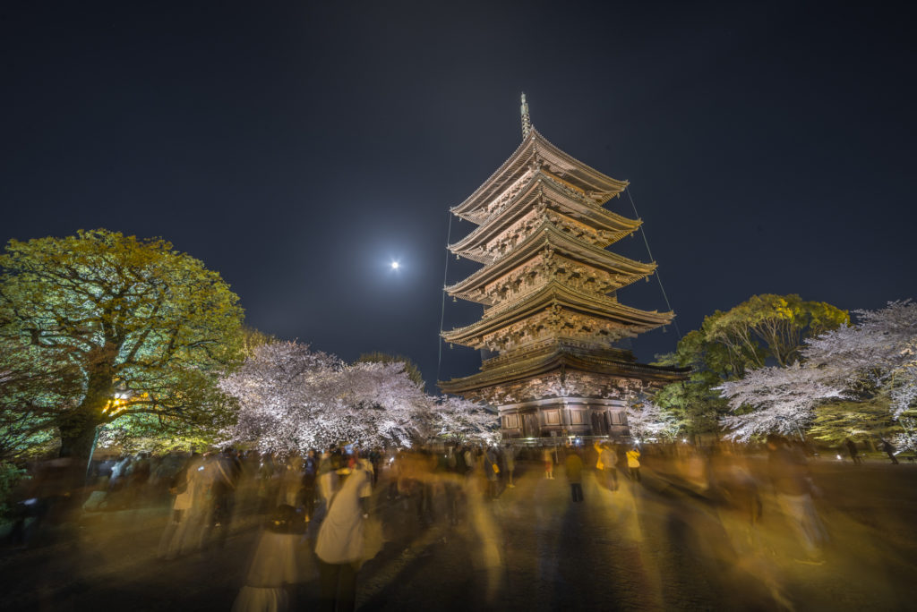 DSC_5656-1024x684 京都 - 東寺 ( 京都 春 桜 写真スポット)