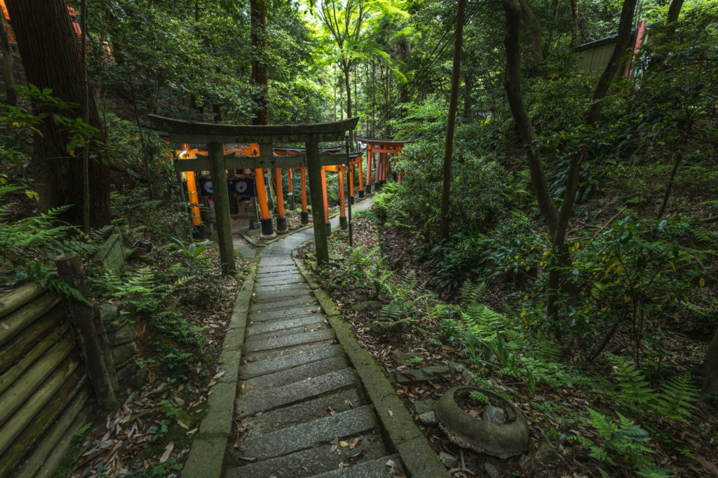 DSC0080-1024x682 京都  伏見稲荷大社(京都の夏、新緑の時期におすすめスポット!写真の紹介やアクセス情報やなど)