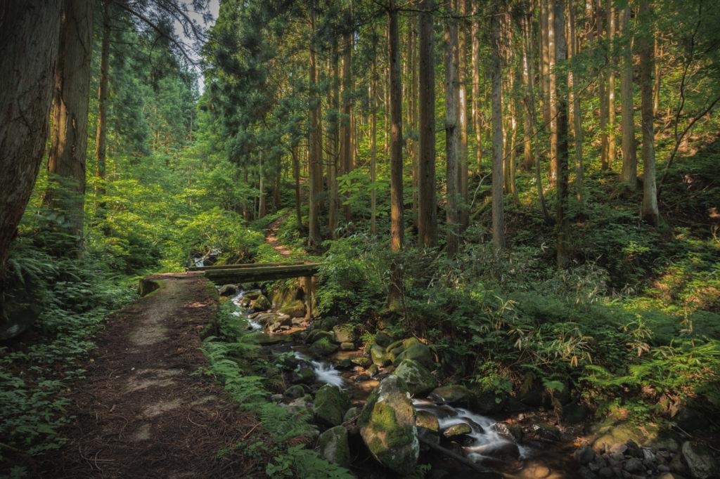 DSC2275-1024x682 兵庫県 シワガラの滝(兵庫県の夏、新緑の時期におすすめの絶景滝写真スポット!撮影した写真の紹介、アクセス情報や撮影ポイントなど!)