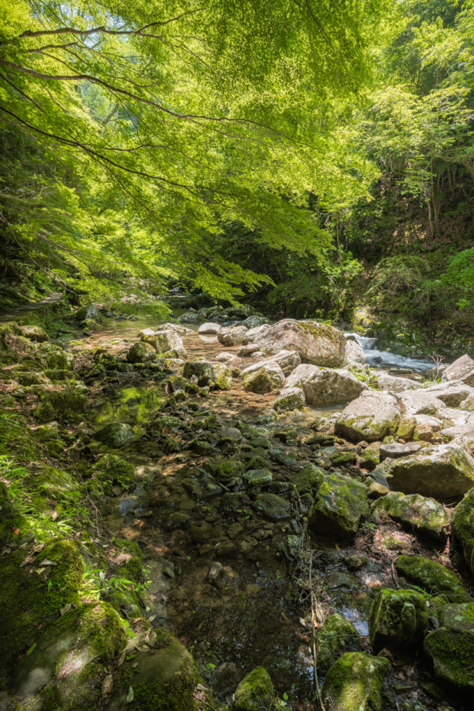 DSC3288-683x1024 三重県 赤目四十八滝( 夏の新緑と秋の紅葉の時期におすすめ!沢山の滝を見れるハイキングスポット! 撮影した写真の紹介、アクセス方法や駐車場、料金などまとめ)