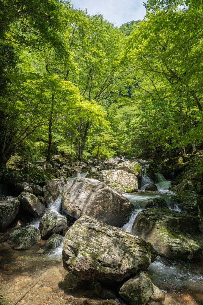 DSC3289-683x1024 三重県 赤目四十八滝( 夏の新緑と秋の紅葉の時期におすすめ!沢山の滝を見れるハイキングスポット! 撮影した写真の紹介、アクセス方法や駐車場、料金などまとめ)