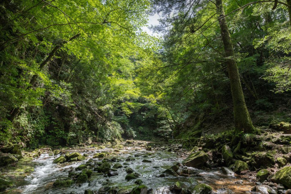 DSC3339-1024x682 三重県 赤目四十八滝( 夏の新緑と秋の紅葉の時期におすすめ!沢山の滝を見れるハイキングスポット! 撮影した写真の紹介、アクセス方法や駐車場、料金などまとめ)