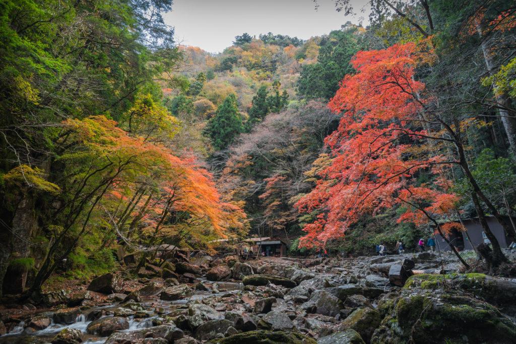 DSC_7037-1024x684 三重県 赤目四十八滝( 夏の新緑と秋の紅葉の時期におすすめ!沢山の滝を見れるハイキングスポット! 撮影した写真の紹介、アクセス方法や駐車場、料金などまとめ)