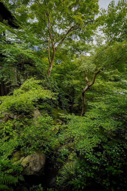 DSC05110 京都  瑠璃光院 ( 京都の夏、新緑のおすすめ写真スポット・アクセス情報や撮影ポイントなど!)