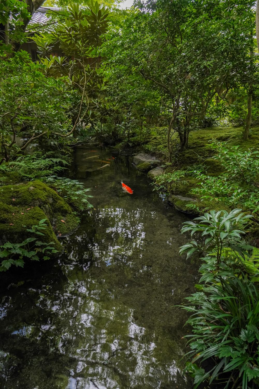 DSC05130 京都  瑠璃光院 ( 京都の夏、新緑のおすすめ写真スポット・アクセス情報や撮影ポイントなど!)