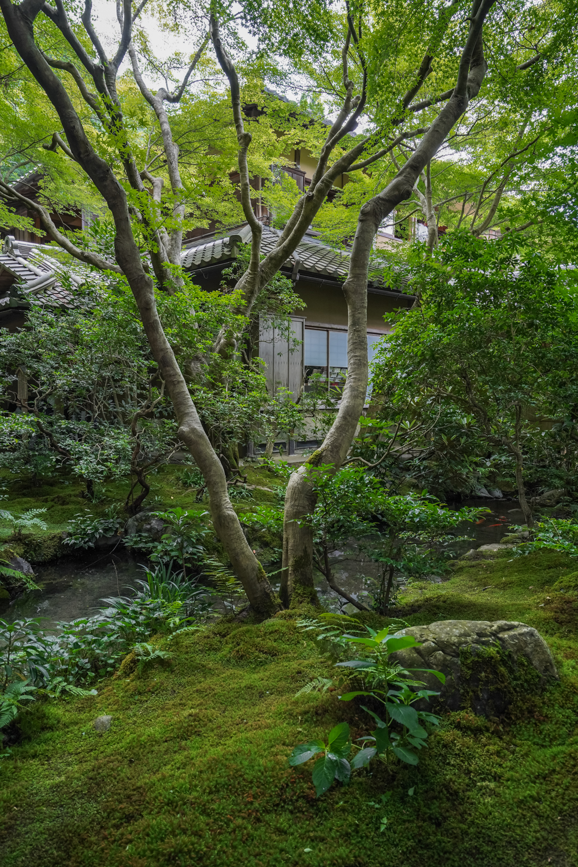 DSC05142-1 京都  瑠璃光院 ( 京都の夏、新緑のおすすめ写真スポット・アクセス情報や撮影ポイントなど!)