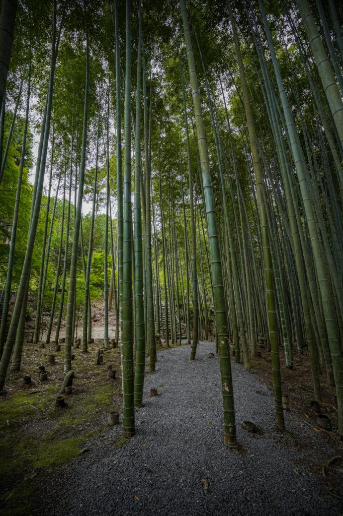 DSC05627-682x1024 京都  圓光寺 ( 京都の夏、新緑のおすすめ庭園写真スポット・アクセス情報や撮影ポイントなど!)