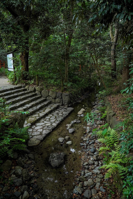 DSC05846 京都  下鴨神社(京都の夏、新緑のおすすめ写真スポット!撮影した写真の紹介、アクセス情報や撮影ポイントなど!)