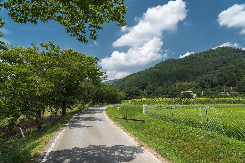 DSC00045 兵庫県 丹波市ひまわり柚遊農園( 約40万本のひまわりが咲き誇るおすすめの写真スポット!撮影した写真の紹介、アクセス情報や撮影ポイントなど!)