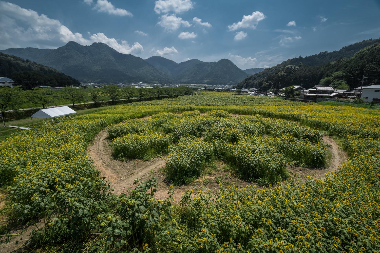 DSC09929 兵庫県 丹波市ひまわり柚遊農園( 約40万本のひまわりが咲き誇るおすすめの写真スポット!撮影した写真の紹介、アクセス情報や撮影ポイントなど!)