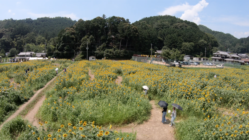 ef0db3446a2d94058dc6f19aceeb5977-1024x576 兵庫県 丹波市ひまわり柚遊農園( 約40万本のひまわりが咲き誇るおすすめの写真スポット!撮影した写真の紹介、アクセス情報や撮影ポイントなど!)