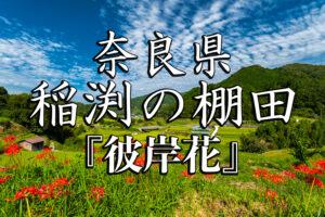 ce4a2cf36c1a02b302e18fd4574679e3-300x200 稲渕秋-京都ブログアイキャッチ用