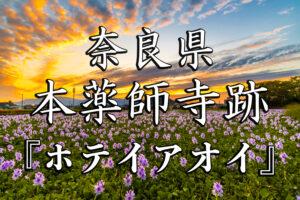 75dea762348189b85a80c424a906e6e9-300x200 本薬師寺跡秋-京都ブログアイキャッチ用