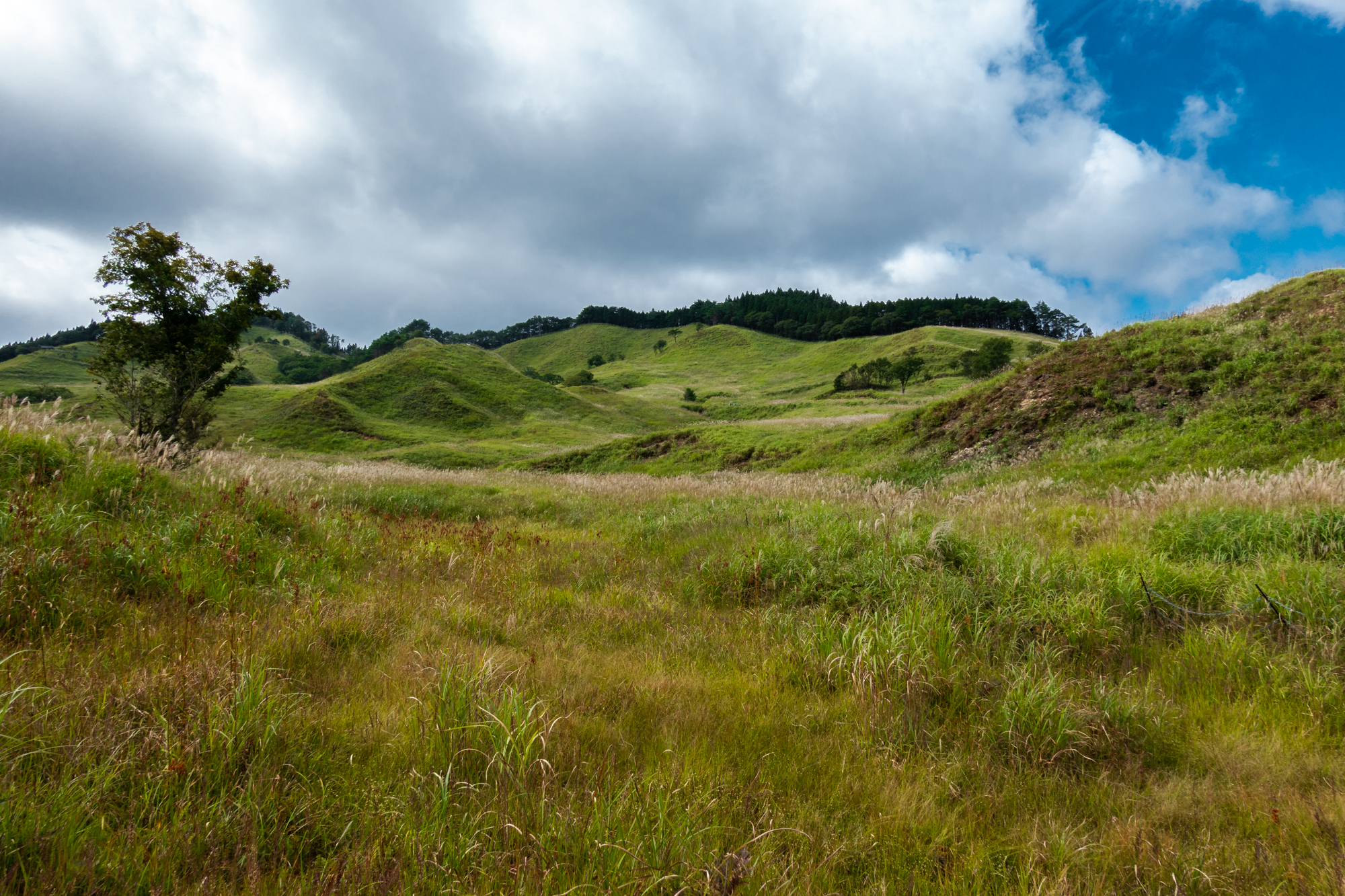 DSC02224 兵庫県 砥峰高原( 一面ススキの草原が広がる絶景の高原写真スポット!撮影した写真の紹介、 アクセス情報や撮影ポイントなど!)