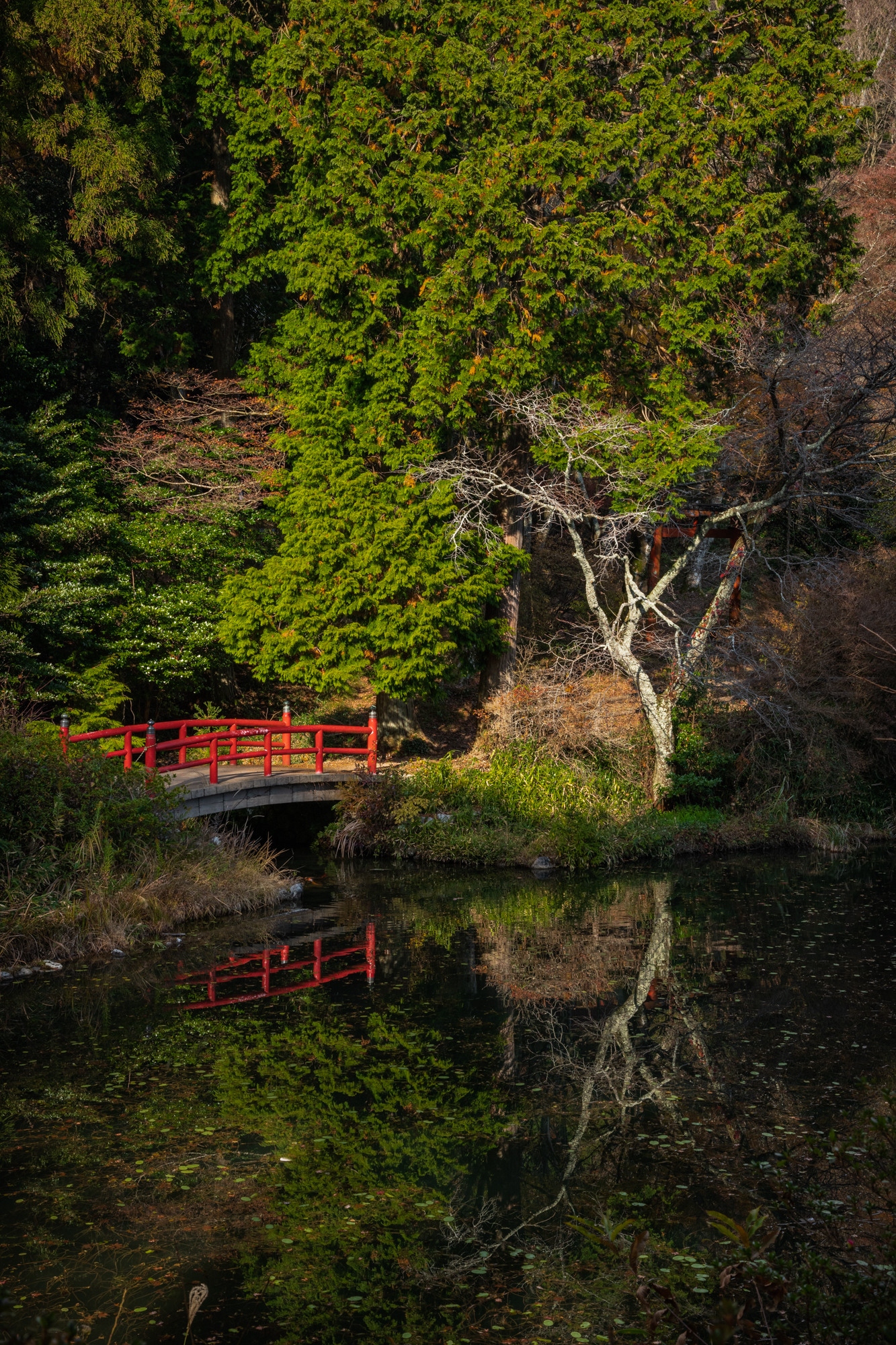 NIKON-CORPORATION_NIKON-D85021925 奈良県  鳥見山公園( 秋におすすめ! 池の赤い橋が美しい紅葉のリフレクション景色! 撮影した写真の紹介、 アクセス情報や撮影ポイントなど!)