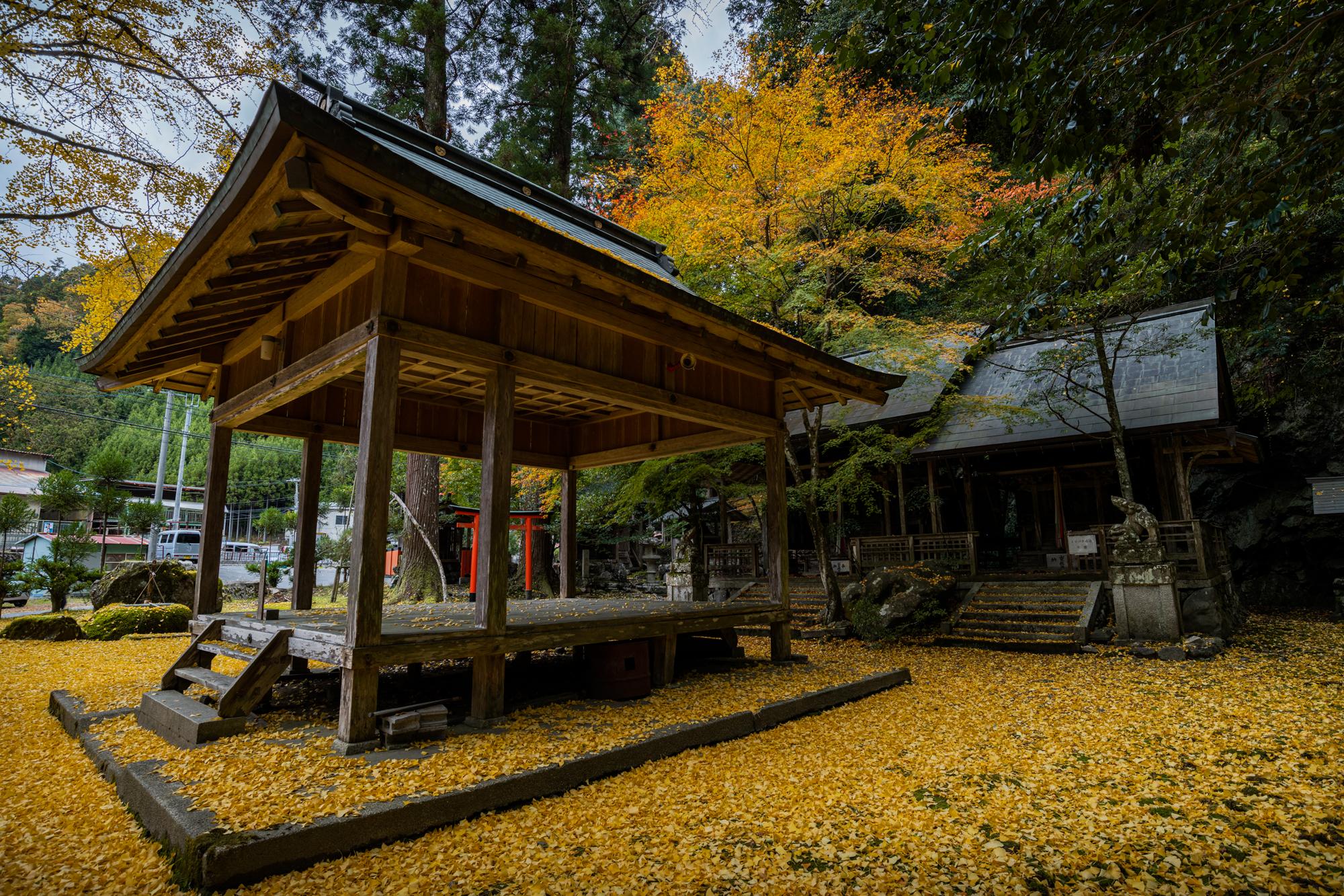 NIKON-CORPORATION_NIKON-D850_3019850546-3019962433_21398 京都  岩戸落葉神社  Kyoto Iwato Ochiba Jinja( 2019年 京都の秋、境内が黄色の絨毯に染まるイチョウのおすすめの写真スポット・アクセス情報や交通手段など!)