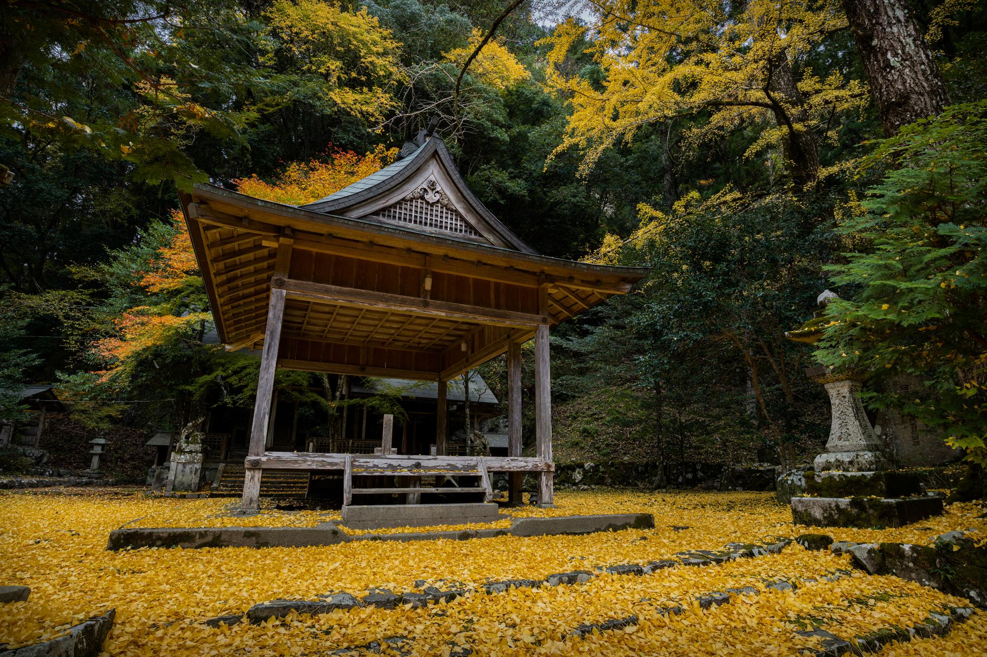 NIKON-CORPORATION_NIKON-D850_3021854322-3021964459_21416 京都  岩戸落葉神社  Kyoto Iwato Ochiba Jinja( 2019年 京都の秋、境内が黄色の絨毯に染まるイチョウのおすすめの写真スポット・アクセス情報や交通手段など!)