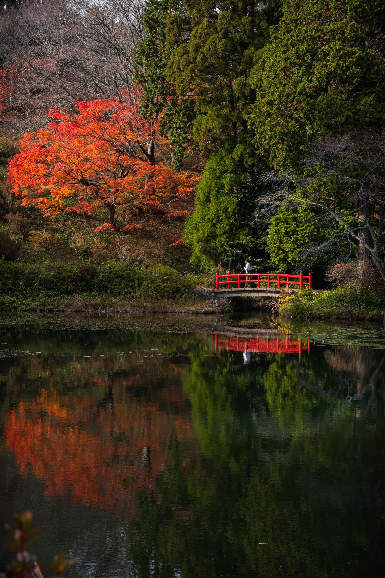 NIKON-CORPORATION_NIKON-D850_3233383602-3233490996_21877 奈良県  鳥見山公園( 秋におすすめ! 池の赤い橋が美しい紅葉のリフレクション景色! 撮影した写真の紹介、 アクセス情報や撮影ポイントなど!)