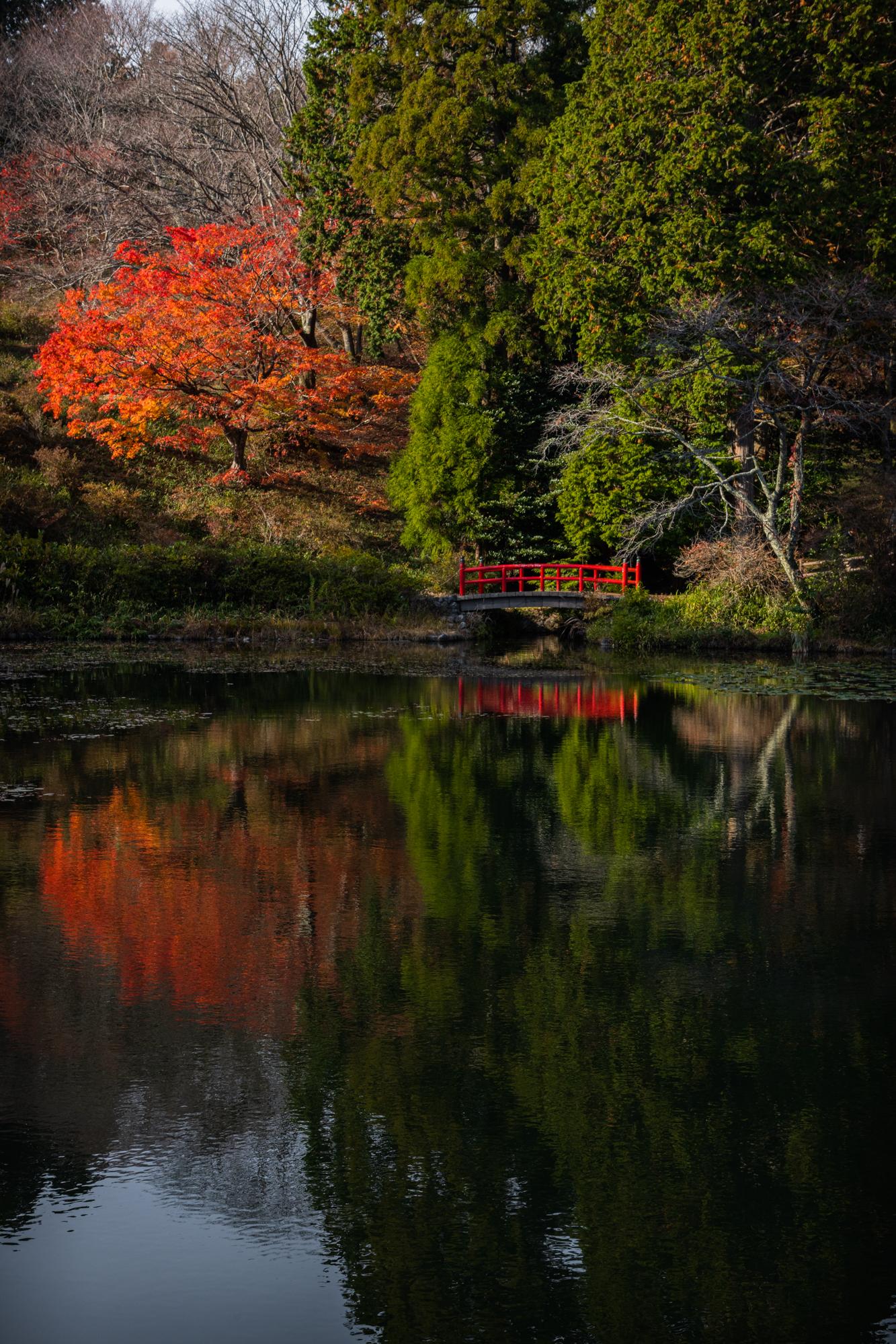 NIKON-CORPORATION_NIKON-D850_3240167410-3240274554_21933 奈良県  鳥見山公園( 秋におすすめ! 池の赤い橋が美しい紅葉のリフレクション景色! 撮影した写真の紹介、 アクセス情報や撮影ポイントなど!)