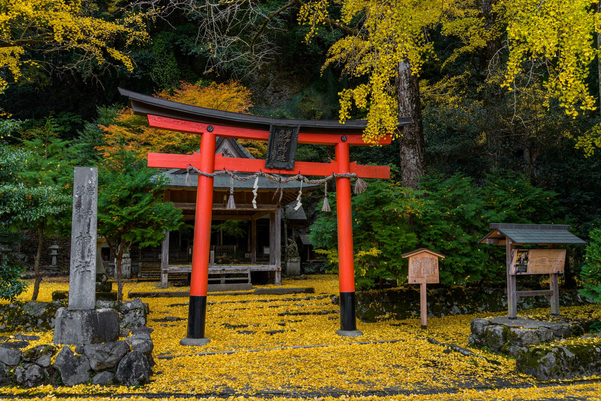 NIKON-CORPORATION_NIKON-D850_3243410482-3243520773_21951 京都  岩戸落葉神社  Kyoto Iwato Ochiba Jinja( 2019年 京都の秋、境内が黄色の絨毯に染まるイチョウのおすすめの写真スポット・アクセス情報や交通手段など!)